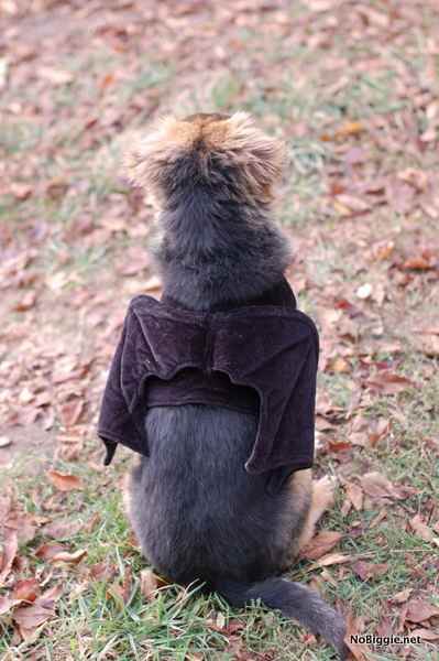 Bat dog costume | NoBiggie.net