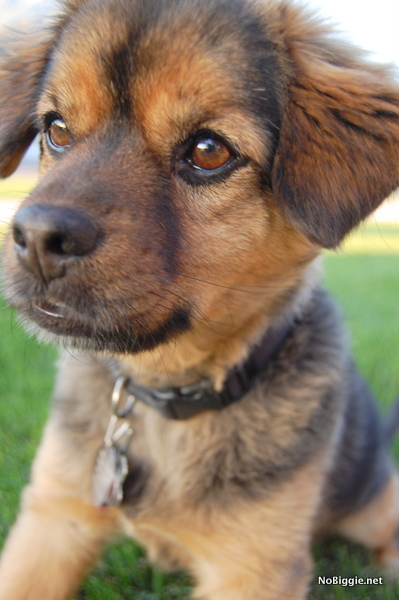 designer dog - NoBiggie.net