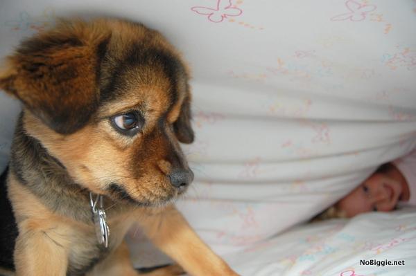 dog breeds - NoBiggie.net