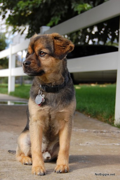 rukkus our dog - NoBiggie.net