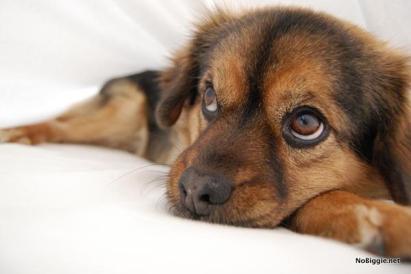rukkus the dog - NoBiggie.net