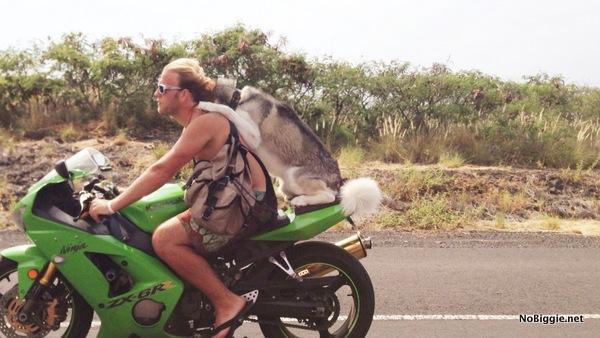 dog on a bullet bike - NoBiggie.net