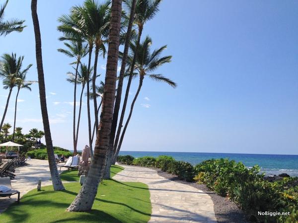palm trees in Hawaii - NoBiggie.net