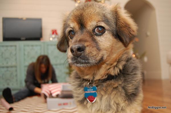 doggie closeup - NoBiggie.net