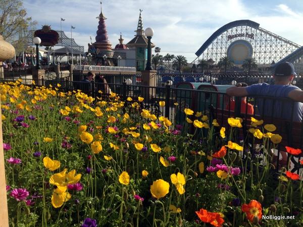 the flowerbeds in Disneyland - NoBiggie.net