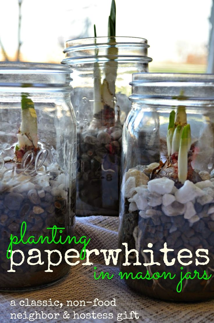Planting Paper whites in Mason Jars | 25+ Mason Jar Gift Ideas