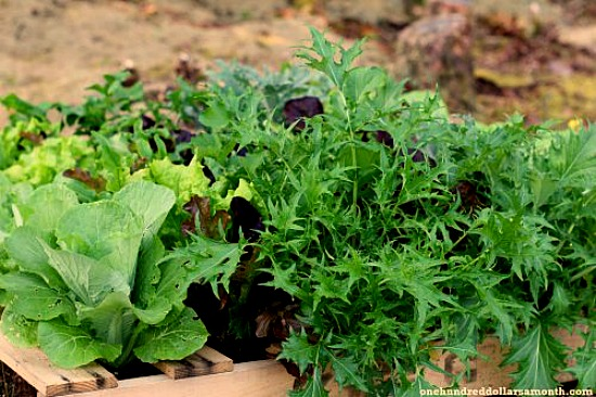 Pallet gardening | 25+ garden pallet projects