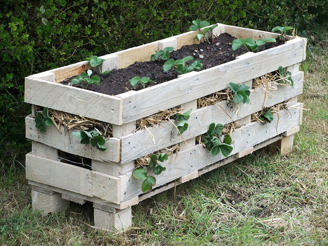 Strawberry Pallet Planter | 25+ garden pallet projects