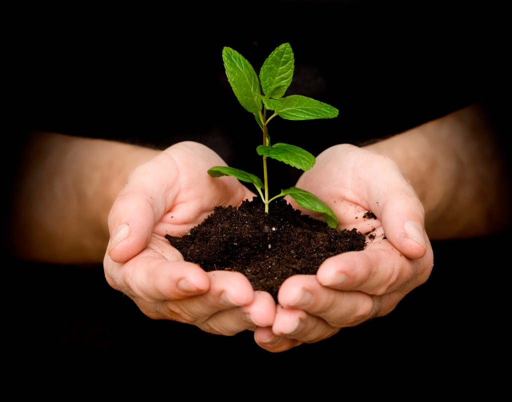 plant a tree for Earth Day | 25+ Earth Day ideas