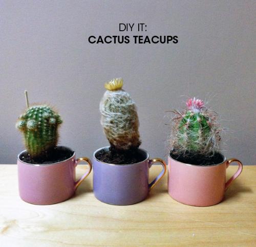 DIY Cactus Teacups | 25+ Cactus crafts and DIY