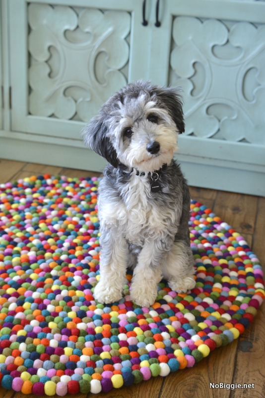 Felt Ball Rug review plus our new puppy   NoBiggie.net
