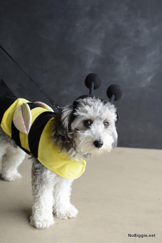 Bumble Bee Dog costume | NoBiggie.net