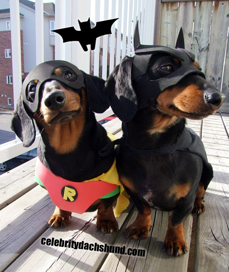 15 Creative Halloween Costumes for Dogs