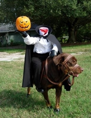 Coolest Homemade Headless Horseman Costume for Dog | 25+ Creative Costumes for Dogs