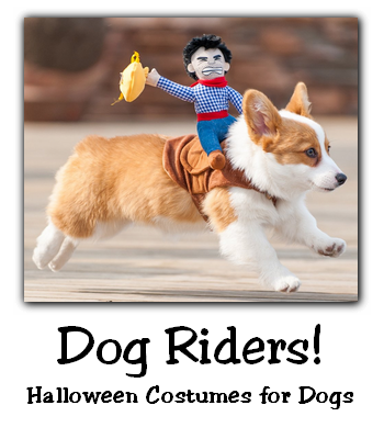Dog Rider Costume | 25+ Creative Costumes for Dogs