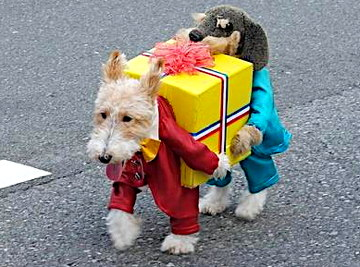 Dogs carrying Present | 25+ Creative Costumes for Dogs