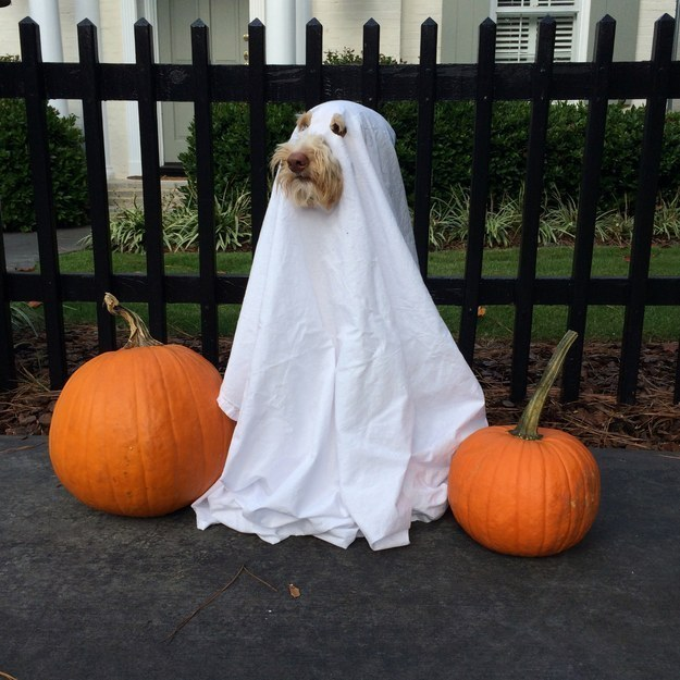 Ghost costume | 25+ Creative Costumes for Dogs