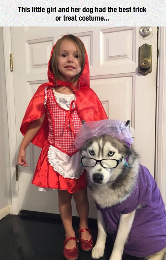 Red Riding Hood and her Ganny wolf costume | 25+ Creative Costumes for Dogs