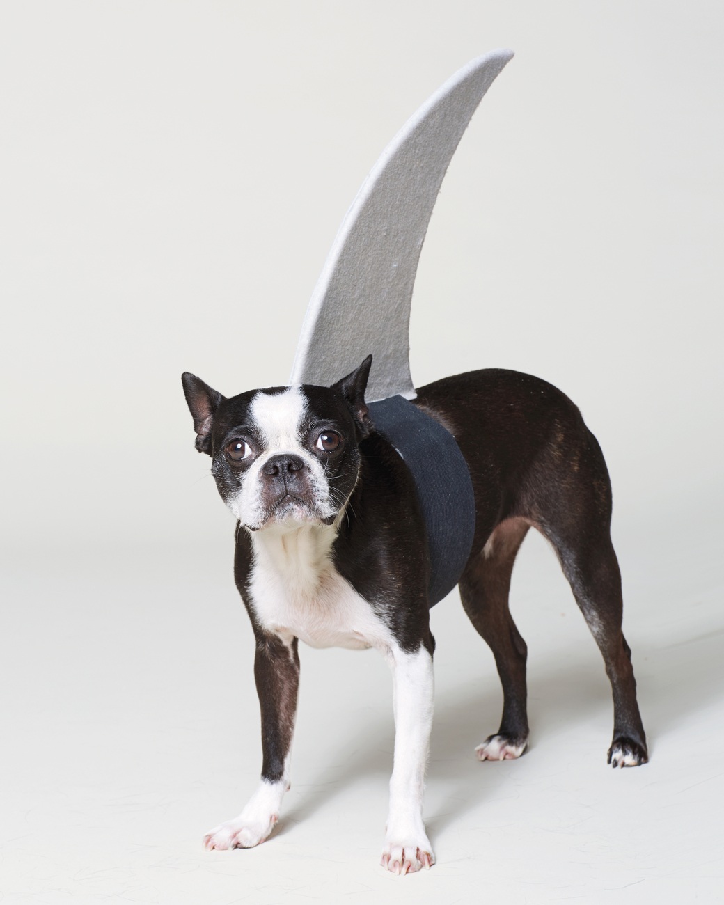 Martha Stewart Dog Halloween Costumes