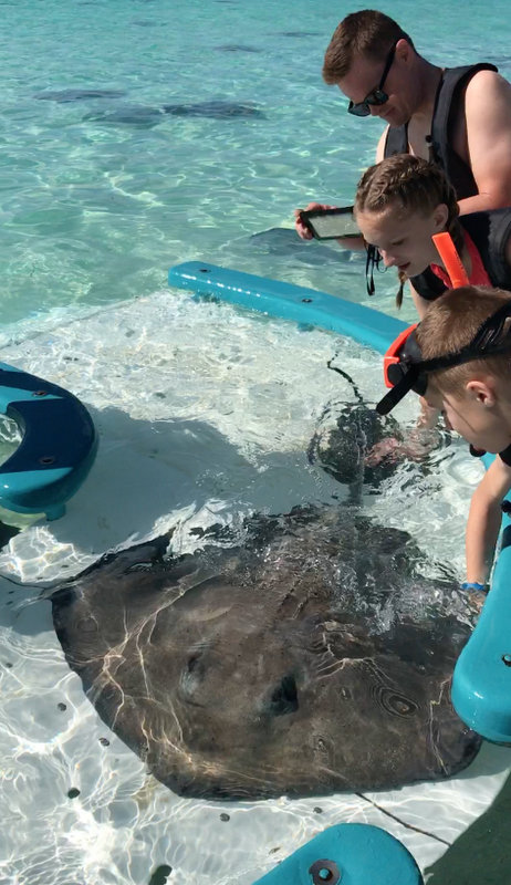 Sting Rays at Castaway Cay