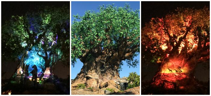 Animal Kingdom Tree-of-Life
