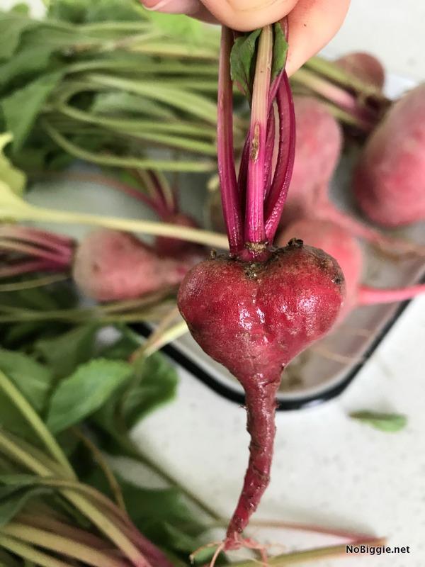 heart beet | NoBiggie.net