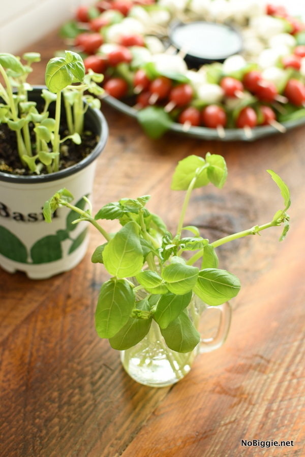basil plant for caprese salad
