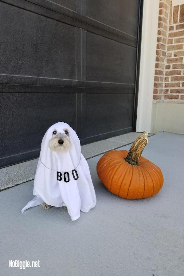ghost dog costume